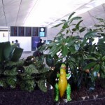 Tina stalking the pocket gardens in HKIA